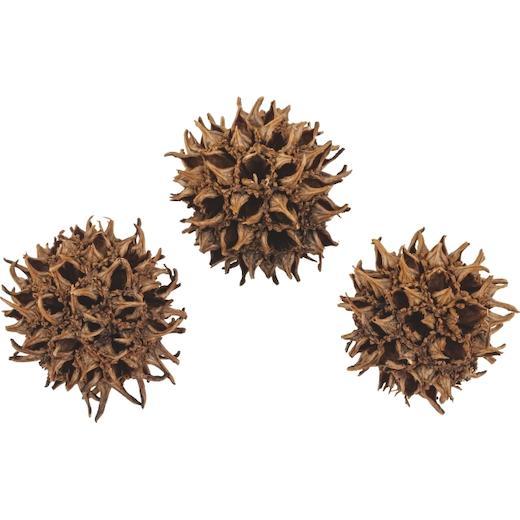 Bien Informé Knorr Prandell Naturel Décorations - 30 G Sweet Gum Balls-afficher Le Titre D'origine ChronoméTrage Ponctuel